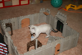 Catcastle