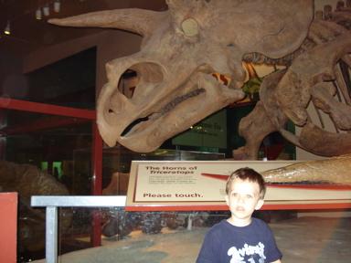 Dinomuseum