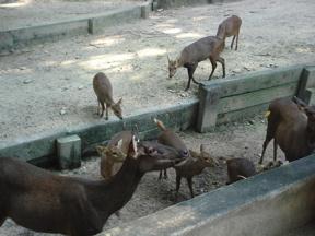 Zoodeer